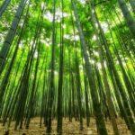 バンブークリア~天然成分100%無添加竹洗剤